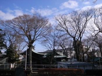 ayumibashi2.jpg
